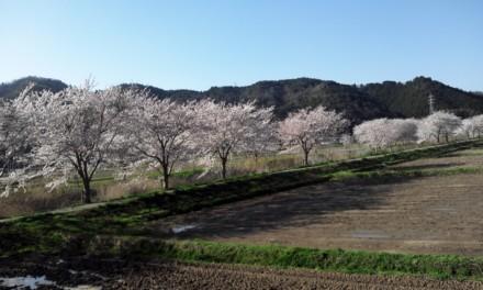思い描いてた「春」の風景を見つけました。