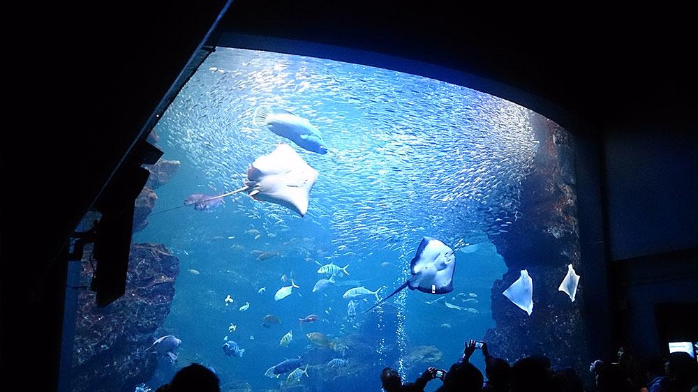 京都水族館再び – 相変わらずフリーダムなイルカ達