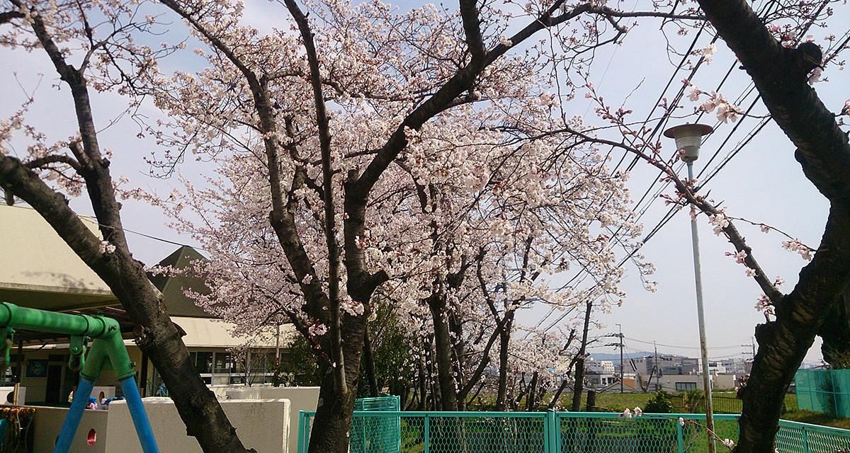 春の訪れ、新しい生活のスタート