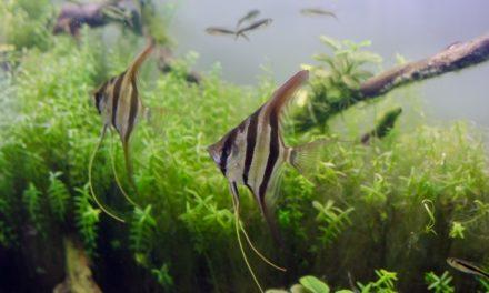 飼育 ― アクアリウムと熱帯魚