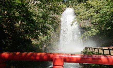 倒木 ― 7年ぶりの箕面の滝は台風の影響でエライ事に