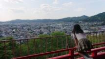 炊飯 ― IH調理器具に翻弄されながら芦田川の景色に癒される