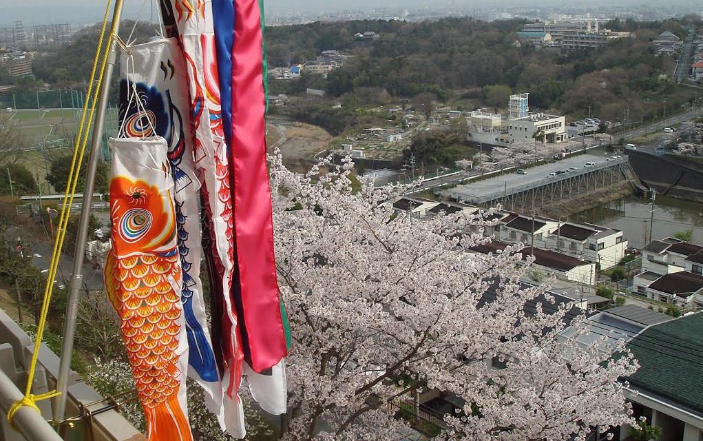 桜が咲き、その横にたなびく鯉のぼり