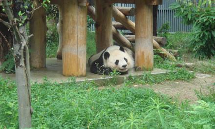 久しぶりに王子動物園に行ってきました。