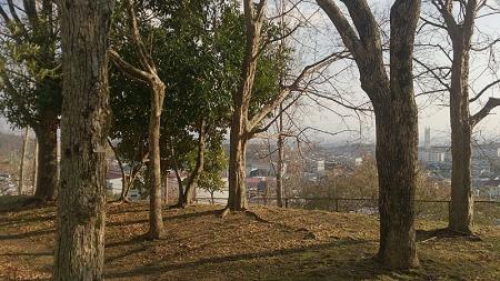 近くの公園からの景色。