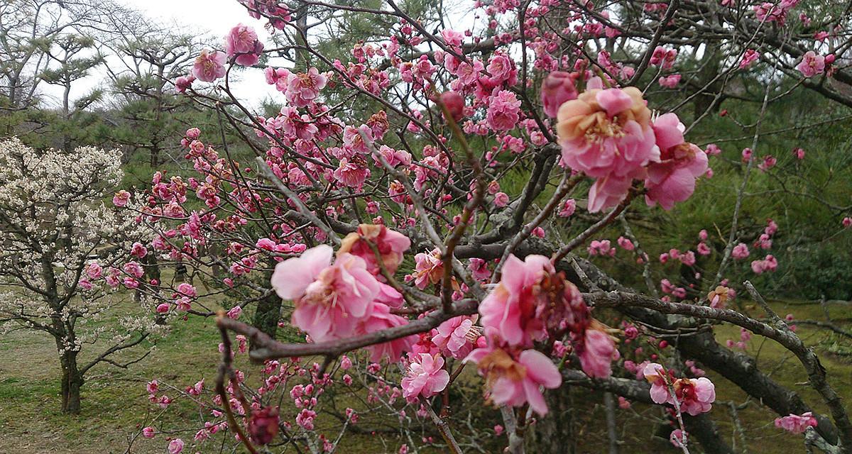 梅を見に万博公園へ。そして初めて足を踏み入れた鉄鋼館