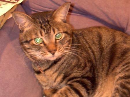一番手元にある古い愛猫の写真。2001年3月撮影。